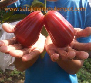 Warna buah menarik