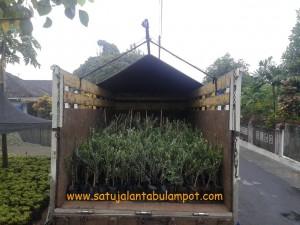 Truck Tanaman