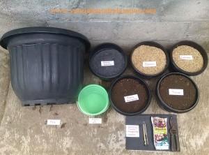 Sediakan campuran metan yg porous : 1 tanah, 1 pupuk kandang, 1 arang sekam dan 2 sekam segar. Perlengkapan yg lain bisa dilihat pada gambar.