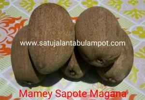 Mamey Sapote_02